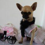 La mode internationale c'est chez Un chien à Tahiti